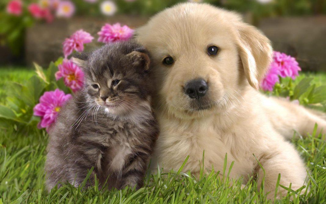Cani e gatti: il Regno unito si oppone alla rivendita