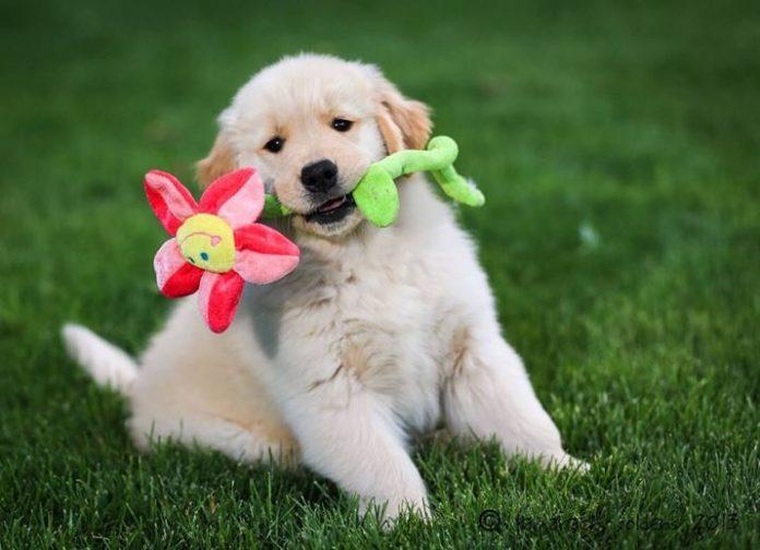 Arriva un cucciolo a casa: un'amico per la vita