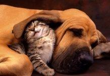 Filariosi cardiopolmonare: la zanzara nemica di cani e gatti