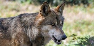 Zoologia: studio degli animali e del loro ambiente
