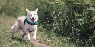 L'alimentazione nel cane: il rimedio migliore per rafforzare le articolazioni arriva dagli omega 3