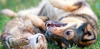 Cane e gatto: componenti della loro dieta